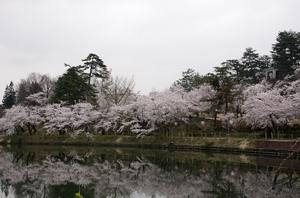 前森公園 桜4.28.1.jpg