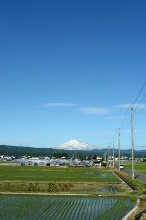 鳥海山写真2013.6.13 倉内2.jpg