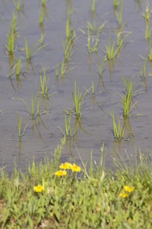 鳥海山写真2013.6.3.三輪2.jpg