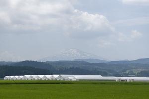 鳥海山写真2014.7.25.jpg