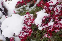 積雪3.jpg