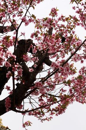 桜05062.jpg
