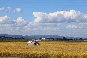 稲刈り-1.jpg