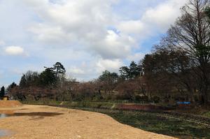 前森公園 桜2015.4.15.3.jpg