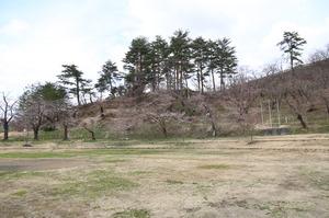 前森公園 桜2015.4.15.4.jpg