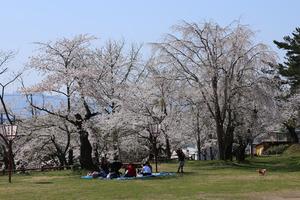 前森公園2015.4.2.jpg