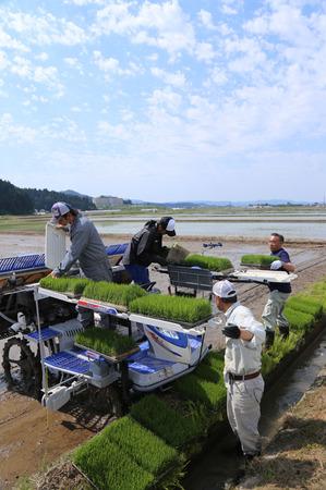 無農薬栽培米 田植え2.jpg