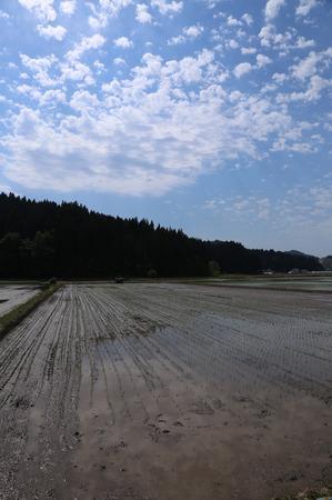 無農薬栽培米 田植え4.jpg