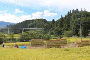 稲刈り2015.9.16.院内.jpg