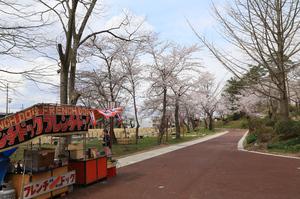 前森公園 桜2016. 2.jpg