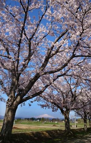 鳥海山写真2016.4.23.jpg