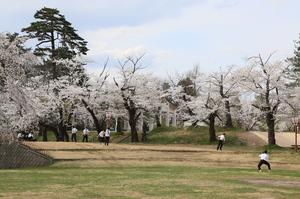 前森公園20017.4.25.1.jpg