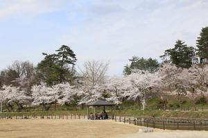 前森公園20017.4.25.4.jpg