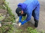 藤山さんセリ洗う.jpgのサムネイル画像のサムネイル画像のサムネイル画像