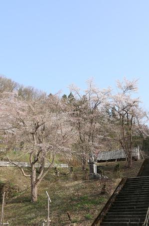 中央公園 2019.4.23.jpg