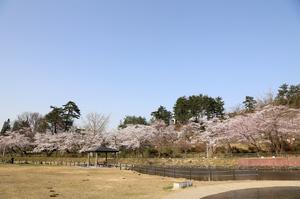 前森公園 2019.4.23.1.jpg