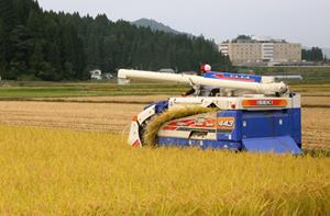 自然栽培米 3.jpg