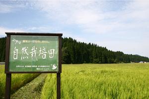 自然栽培米4jpg.jpg